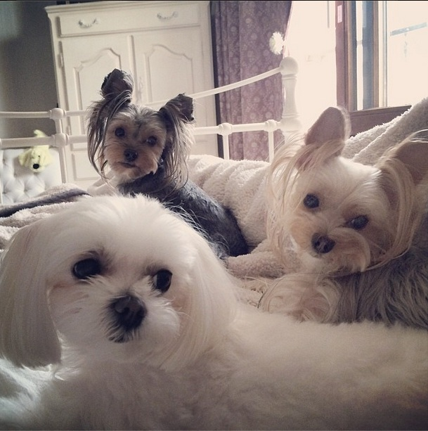 [140516] Sooyoung (SNSD) Update New Picture Ft Cherry, Mori and Suri