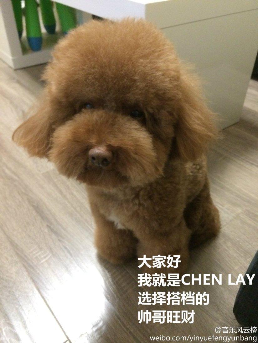 [140517] Chan & Lay (EXO)'s Dog at yinyuefengyunbang [10]