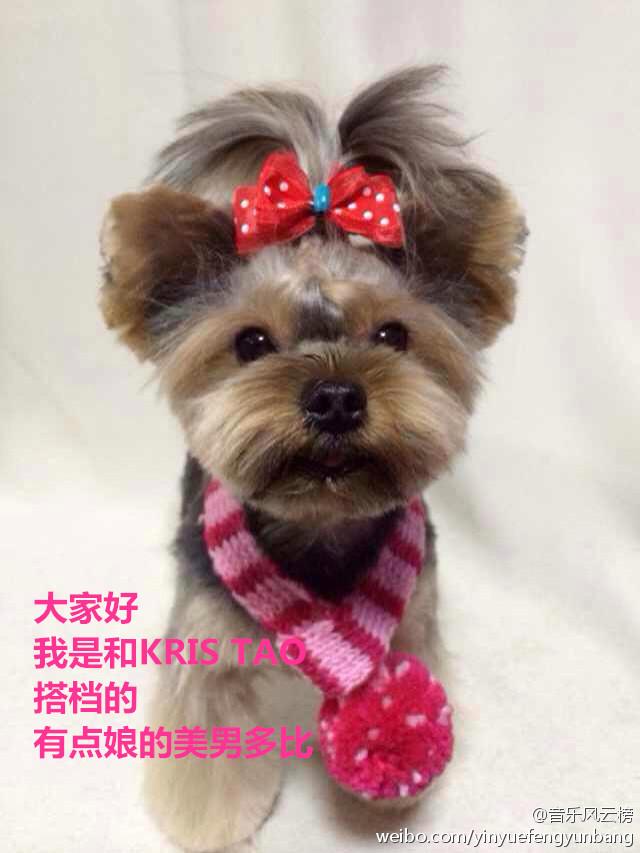 [140517] Kris & Tao (EXO)'s Dog at yinyuefengyunbang [11]