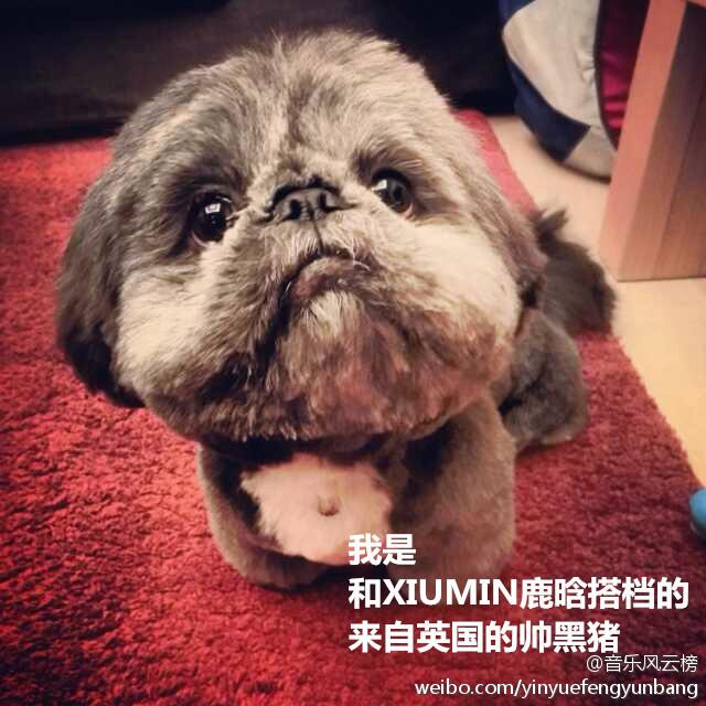 [140517] Xiumin (EXO)'s Dog at yinyuefengyunbang [12]